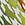 beige/grün