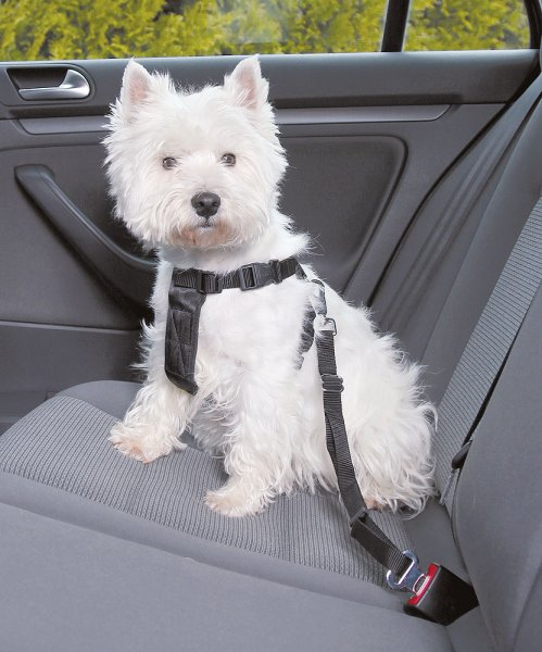 Car Harness Basic for Dogs