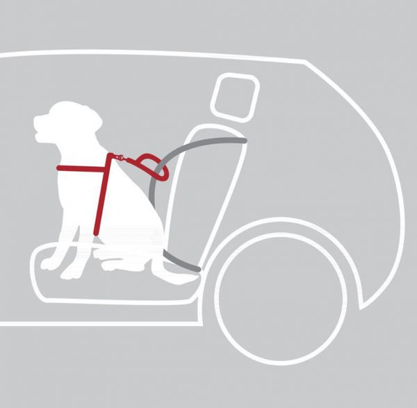 Comfort car harness for dogs