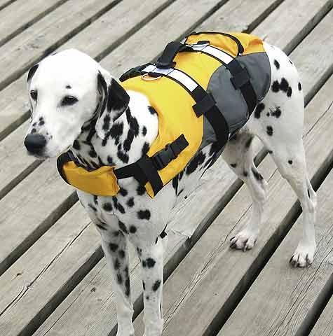 Compass dog buoyancy aid