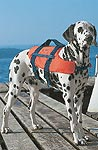 Dogs' life jackets